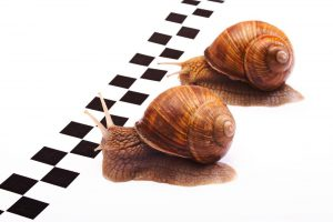Eastern counties snail racing championships